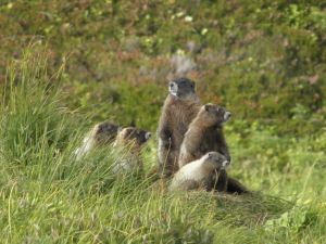 BitMarmot. Diversify your back yard portfolio today
