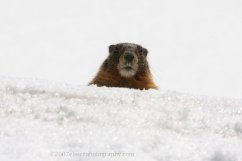 BitMarmot: always cool. Never frozen