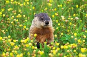 #BitMarmot gets serious