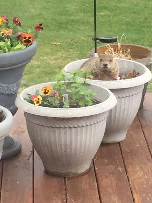 This is my flowerpot. You people just live here